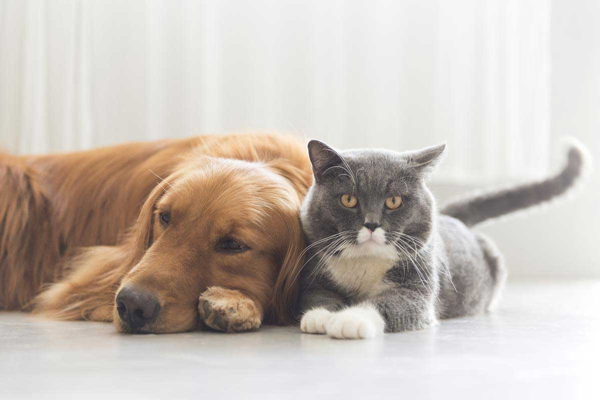 about our veterinary practice  Seven Valleys, PA